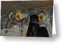 Swallows Opera  Greeting Card