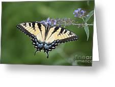 Swallowtail 20120723_24a Greeting Card