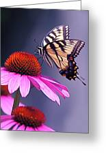 Swallowtail And Coneflower Greeting Card