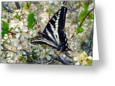 Swallowtail And Plum Blossoms Greeting Card
