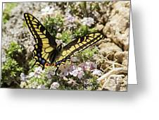 Swallowtail At Sand Wash Greeting Card