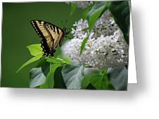Swallowtail Beauty Greeting Card