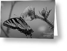 Swallowtail Black And White Greeting Card