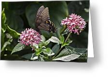 Swallowtail Buterfly Greeting Card