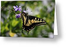 Swallowtail Butterfly 2 Greeting Card