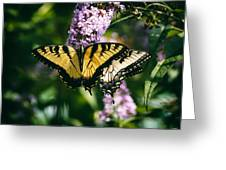 Swallowtail Butterfly At The Maryland Zoo Greeting Card