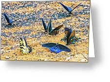 Swallowtail Butterfly Convention Greeting Card
