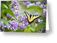 Swallowtail Butterfly On Lilacs Greeting Card