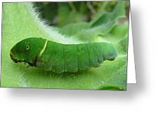 Swallowtail Caterpillar Greeting Card