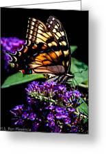 Swallowtail Feasting Greeting Card