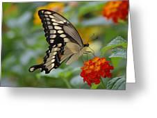 Swallowtail On A Lantana Greeting Card