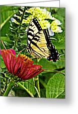 Swallowtail On A Zennia Greeting Card