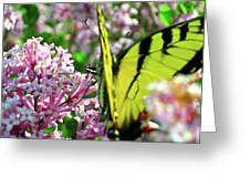 Swallowtail On Korean Lilac Florals Greeting Card