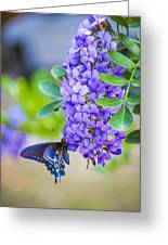 Swallowtail On Mountain Laurel Greeting Card