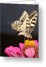 Swallowtail On Pink Flower  Greeting Card