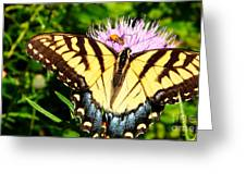 Swallowtail On Thistle Greeting Card