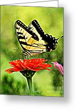 Swallowtail Resting Greeting Card