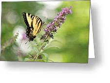 Swallowtail Stance Greeting Card