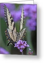 Swallowtail Staredown Greeting Card