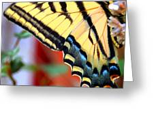 Swallowtail Wing Greeting Card