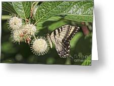 Swallowtail With Flowers Greeting Card