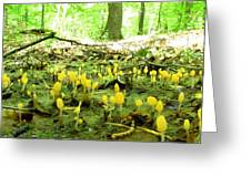 Swamp Becon Fungi Greeting Card