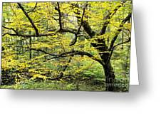 Swamp Birch In Autumn Greeting Card