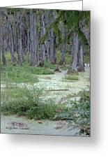 Swamp Garden At Magnolia Plantation And Gardens Greeting Card