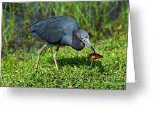 Swamp Hunter Greeting Card