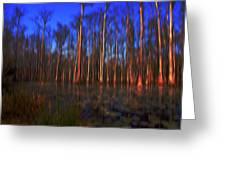 Swamp In Cypress Gardens Greeting Card