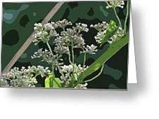 Swamp Milkweed Abstract Greeting Card