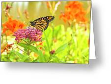 Swamp Milkweed And Monarch Greeting Card