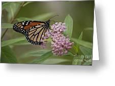Swamp Milkweed Monarch Greeting Card
