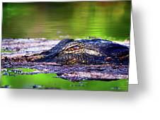 Swamp Patrol Greeting Card