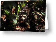 Swamp Raccoon Greeting Card