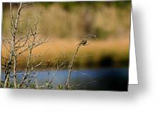 Swamp Sparrow Greeting Card