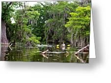 Swamp Stroll Greeting Card
