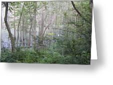 Photo Of Swamp Greeting Card
