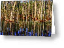 Swamp Trees Greeting Card