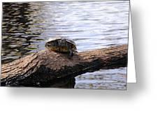 Swamp Turtle Greeting Card
