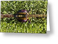 Swamp Turtle Sunning On A Log Greeting Card