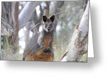Swamp Wallaby Greeting Card