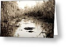 Swamps Of Louisiana 6 Greeting Card