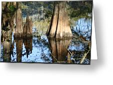 Swampy Knees Greeting Card