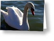 Swan 000 Greeting Card
