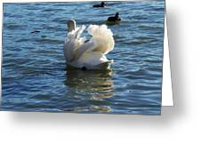 Swan 001 Greeting Card