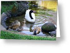 Swan And Wood Ducks Greeting Card