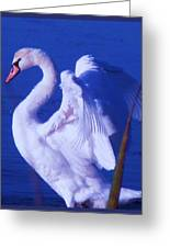 Swan At Cape May Point State Park  Greeting Card