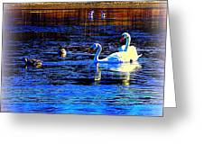When It Seems Like The Swans Are Ruling The Sea  Greeting Card by Hilde Widerberg