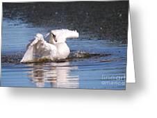 Swan Bath Greeting Card